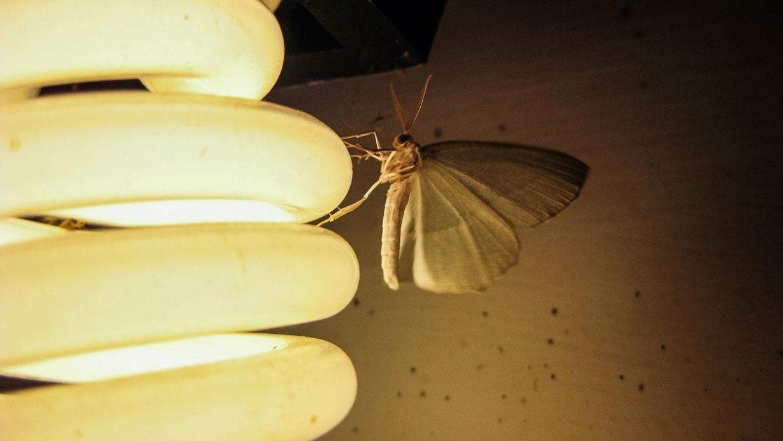 SN_moth